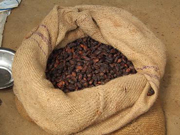 agriculture-kellafrique